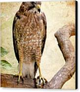 Hawk With Fish Canvas Print by Ray Downing