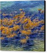 Hdr Underwater Plant Life Canvas Print by Jamie Roach