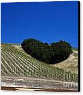 Heart Hill Paso Robles Canvas Print by Jason O Watson
