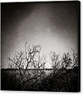 Hedgerow Canvas Print by Dave Bowman