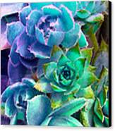 Hens And Chicks Series - Deck Blues Canvas Print by Moon Stumpp
