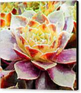 Hens And Chicks Series - Early Morning Quite Canvas Print by Moon Stumpp