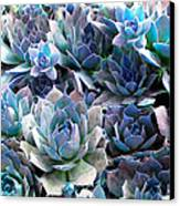 Hens And Chicks Series - Evening Light Canvas Print by Moon Stumpp