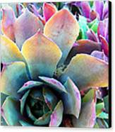 Hens And Chicks Series - Unfolding Canvas Print by Moon Stumpp