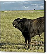 Hereford Bull Canvas Print by Mark Newman