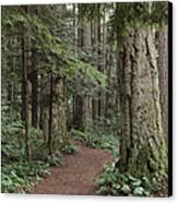 Heritage Forest Canvas Print by Randy Hall