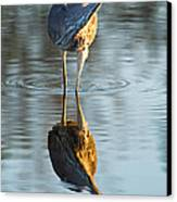 Heron Looking At Its Own Reflection Canvas Print by Andres Leon
