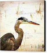 Heron Canvas Print by Marty Koch