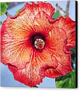 Hibiscus - Mahogany Star Flower Canvas Print by Donna Proctor