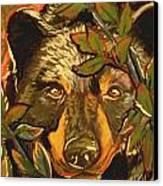 Hiding Bear Canvas Print by Jenn Cunningham