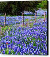 Hill Country Heaven - Texas Bluebonnets Wildflowers Landscape Fence Flowers Canvas Print by Jon Holiday
