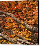 Holding Back Canvas Print by Peter Coskun