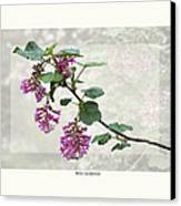 Ribes Sanguineum - California Currant Canvas Print by Saxon Holt