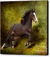 Horse Angel Canvas Print by Dorota Kudyba