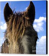 Horse Canvas Print by Bernard Jaubert