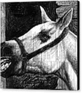 Horse Canvas Print by Mark Zelmer