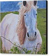 Horse With Stormy Skies Canvas Print by Dawn Dreibus