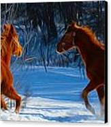 Horses At Play Canvas Print by Tracy Winter