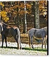 Horses In Autumn Pasture   Canvas Print by Susan Leggett