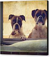 How Much Is That Doggie In The Window? Canvas Print by Stephanie McDowell