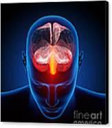 Human Brain Canvas Print by Johan Swanepoel