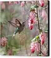Hummingbird Heaven Canvas Print by Angie Vogel