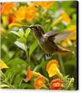 Hummingbird Looking For Food Canvas Print by Heiko Koehrer-Wagner
