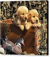 Hunting Buddies - Fs000130 Canvas Print by Daniel Dempster
