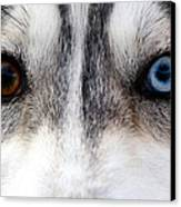 Husky Eyes Canvas Print by Keith Allen