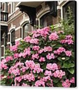 Hydrangeas In Holland Canvas Print by Carol Groenen