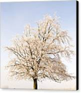Iced Tree Canvas Print by Anne Gilbert