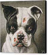 I'm A Bad Dog What Kind Of A Dog Are You Circa 1895 Canvas Print by Aged Pixel