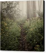 In Silence Canvas Print by Amy Weiss