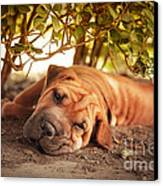 In The Shade Canvas Print by Jane Rix