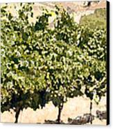 In The Vineyard Canvas Print by Artist and Photographer Laura Wrede