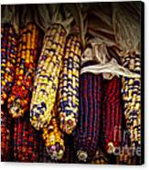 Indian Corn Canvas Print by Elena Elisseeva