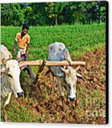 Indian Farmer Plowing With Bulls Canvas Print by Image World