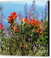 Indian Paintbrush Canvas Print by Robert Bales