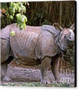 Indian Rhinoceros Canvas Print by Mark Newman