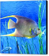 Into Blue - Tropical Fish By Sharon Cummings Canvas Print by Sharon Cummings