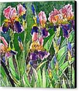 Iris Inspiration Canvas Print by Zaira Dzhaubaeva