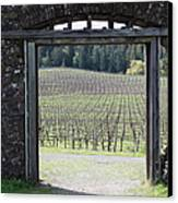 Jack London Ranch Winery Ruins 5d22132 Canvas Print by Wingsdomain Art and Photography