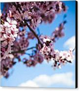 Japanese Sakura Canvas Print by Anthony Citro