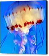Jellyfish 3 Canvas Print by Dawn Eshelman