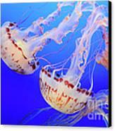 Jellyfish 9 Canvas Print by Bob Christopher