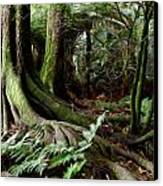Jungle Trunks3 Canvas Print by Les Cunliffe