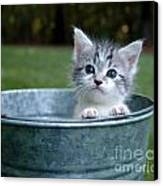 Kitty In A Bucket Canvas Print by Jt PhotoDesign