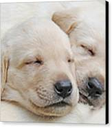 Labrador Retriever Puppies Sleeping  Canvas Print by Jennie Marie Schell