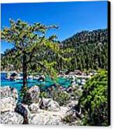 Lake Tahoe Bonsai Tree Canvas Print by Scott McGuire