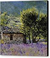 Lala Vanda Canvas Print by Guido Borelli